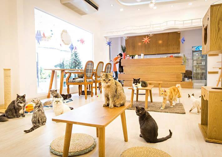 Mẫu thiết kế quán cà phê đẹp